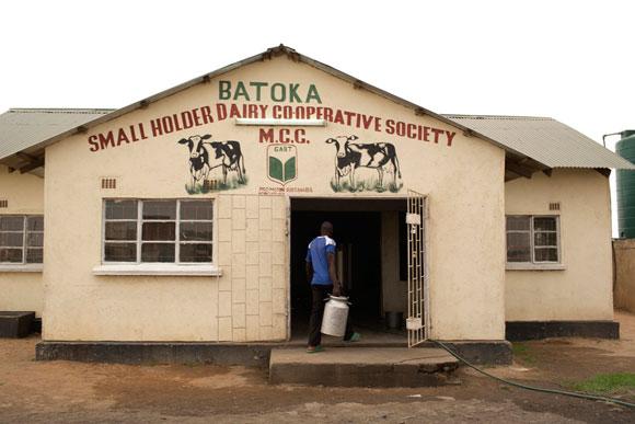 Batoka Dairy Cooperative, Zambia
