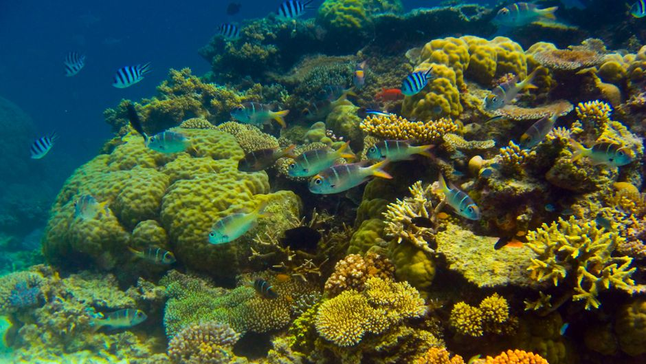 Environment Minister Greg Hunt Admits Great Barrier Reef Is in Trouble