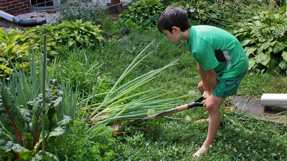 boy harvests