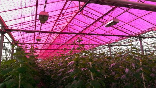 New Breed of Solar Panels Fine-Tunes Light for Crops