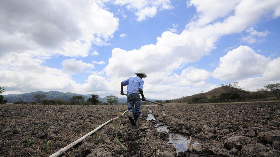 irrigation dryland