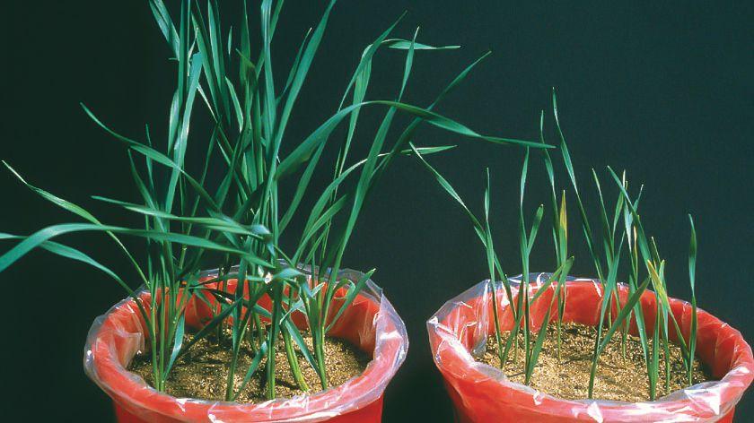 Phosphorus: Unsung bedrock of prosperity
