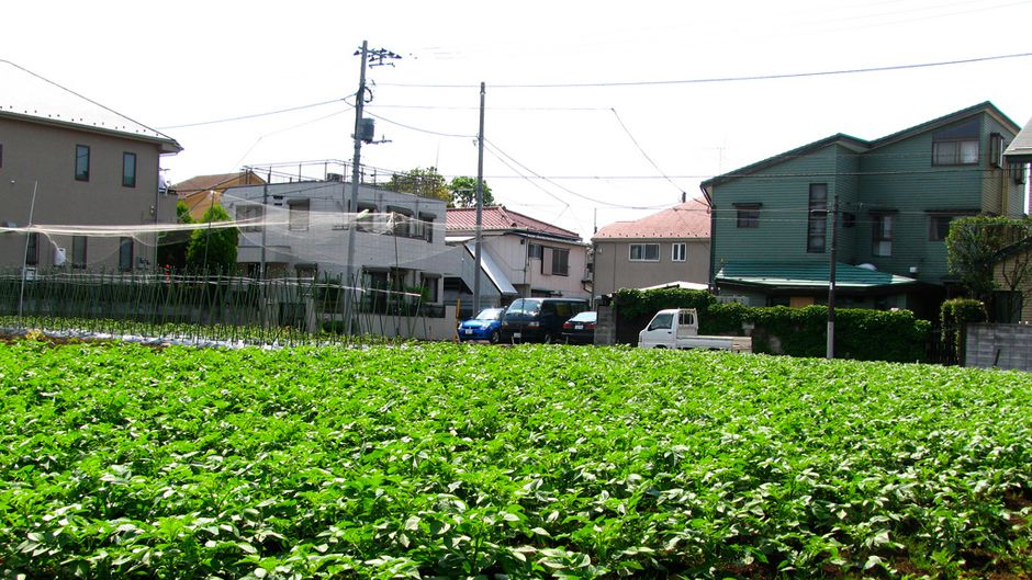 Japan's urban agriculture: cultivating sustainability and wellbeing