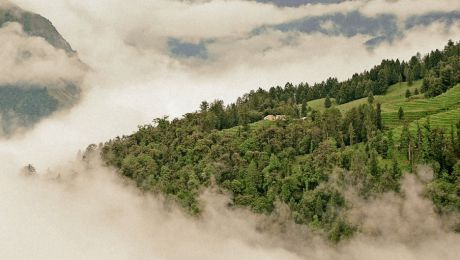Creating Visibility for Forests Worldwide