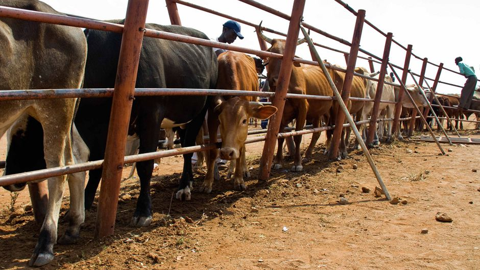 Reversing desertification with livestock