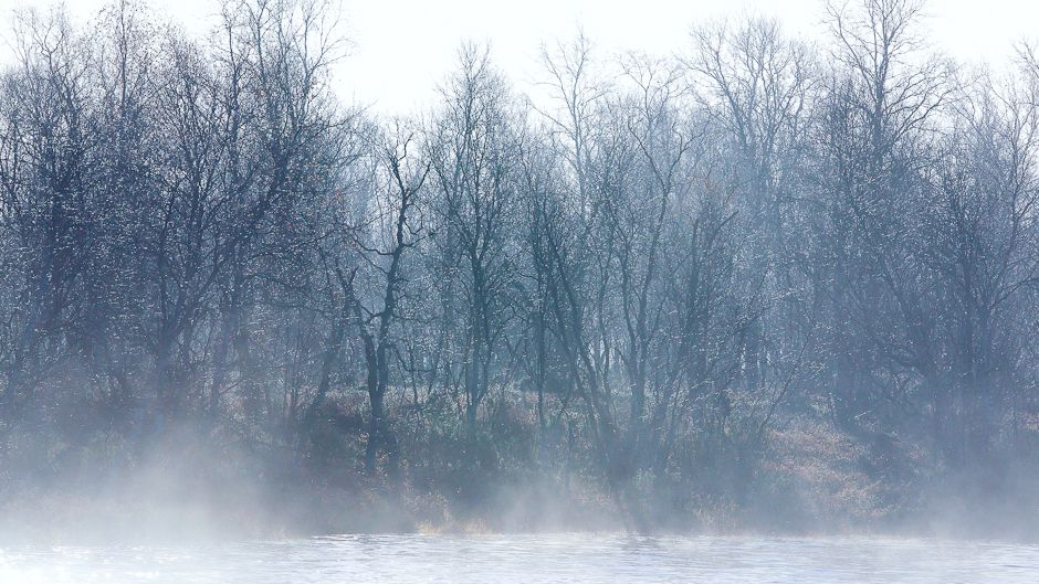 A late-September morning's  frosty air thickens into fog above the Näätämö River, enveloping birch trees on the riverbank. Photo: © Gleb Raygorodetsky 2012.