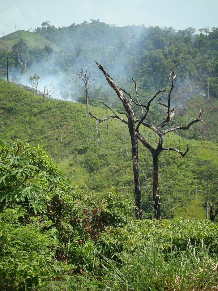 Narco-Deforestation Linking Drug Policy and Forest Conservation