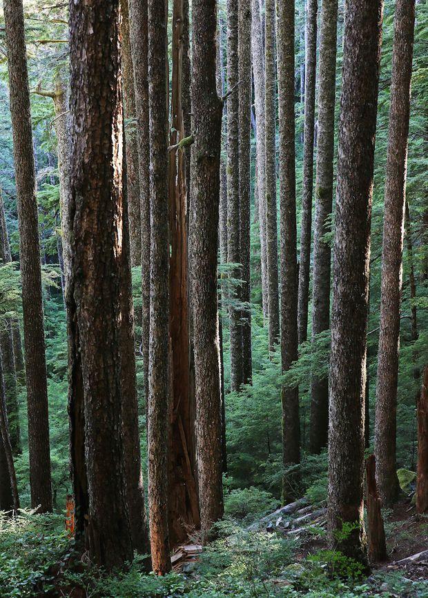 Coastal temperate rainforest
