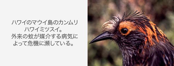 写真:Rare Birds Yearbook/Peter Hodum(「希少鳥類年鑑」ピーター・ホーダム)
