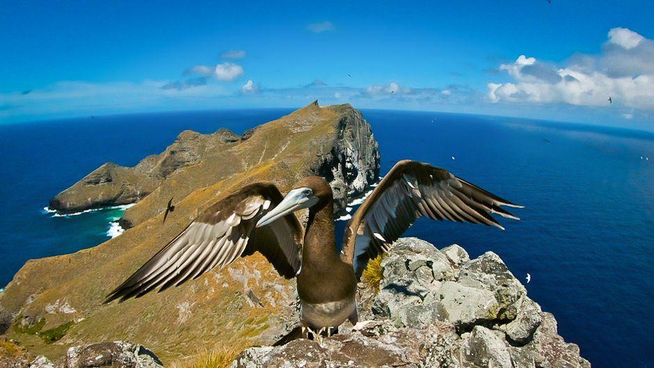 Papahanaumokuakea © J Tamelander IUCN