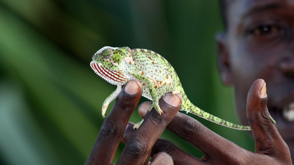 生物多様性100を支持し、野生生物を守る