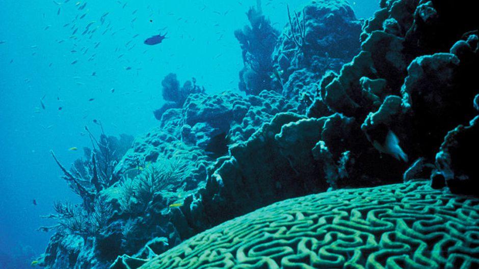 coral-reef-florida