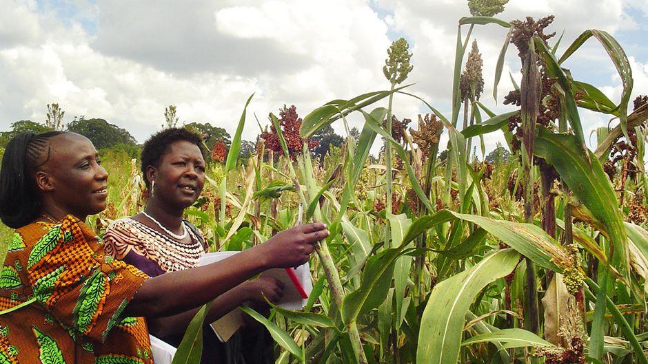 地域の革新が世界の食料危機を救う