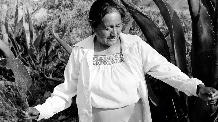 先住民女性の生計を助ける甘い樹液