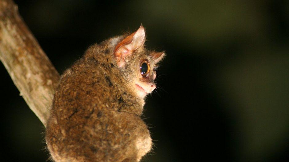 絶滅のおそれのある生物種のレッドリスト