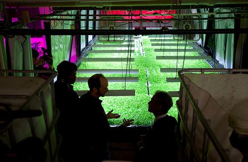 ラーム・エマニュエル市長による栽培システムの視察。(2012年3月)写真:Plant Chicago, NFP/Rachel Sweni