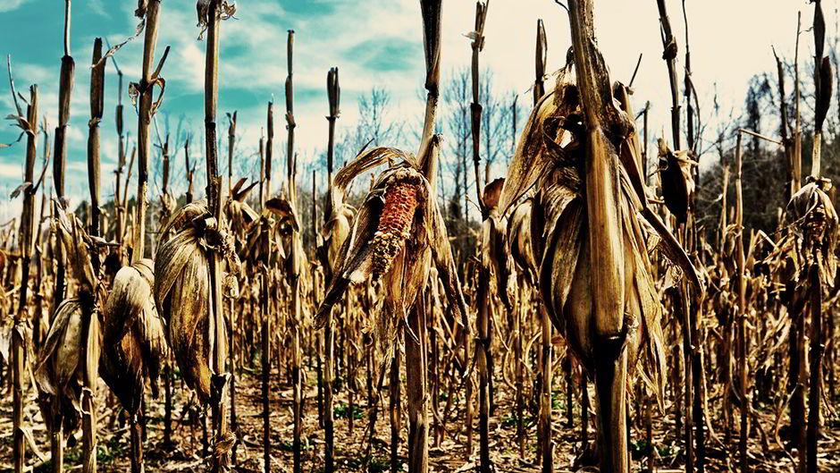 食料不足:各国の迅速な対応が急務