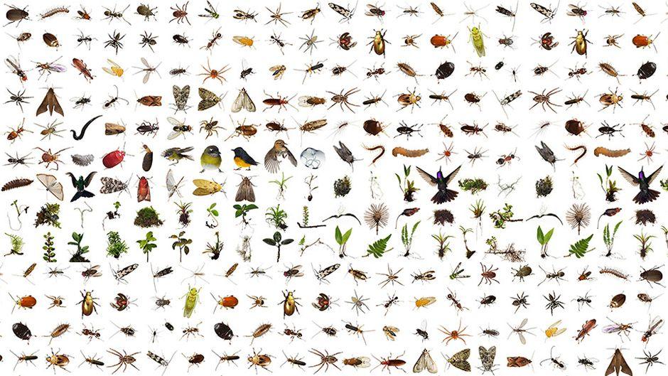 1立方フィートの生物世界
