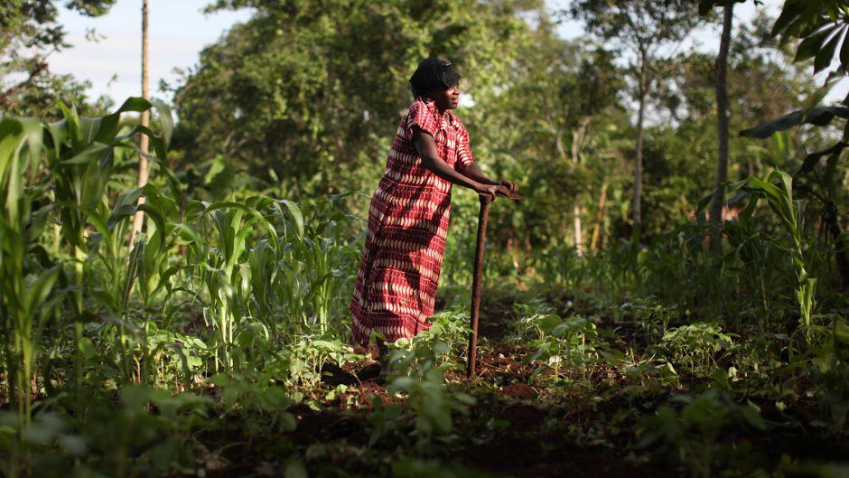 世界の気候ガバナンスにおける先住民族の役割