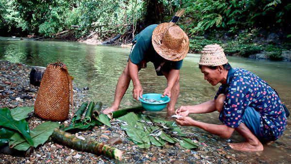 エコツーリストのために魚を準備するダヤック族の人々。写真:キット・ウィリアムズ/国連大学
