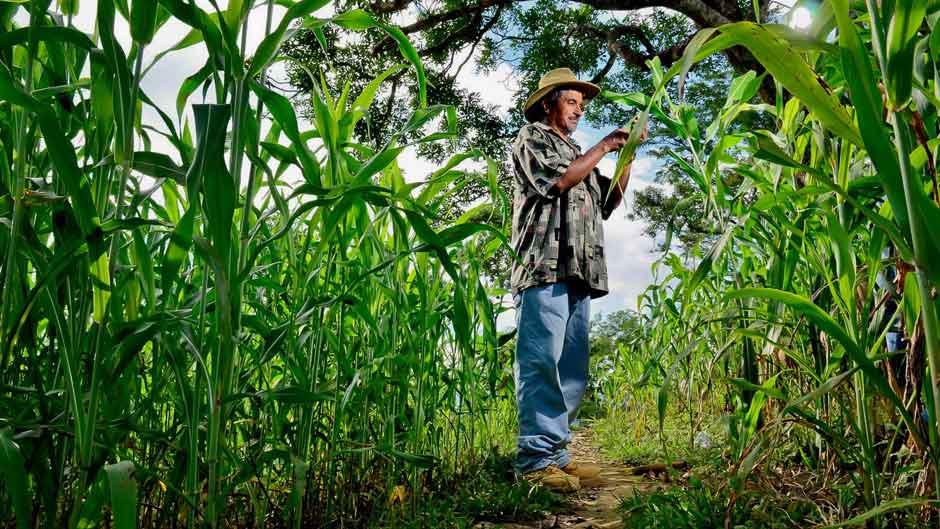 開発途上国のアグロフォレストリーと食料安全保障 写真:ニール・パーマー/CIAT アグロフォレス