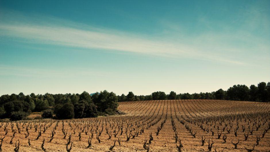 気候変動がワイン生産を脅かす