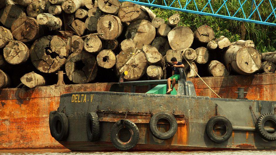森林破壊のために炭素を守る?