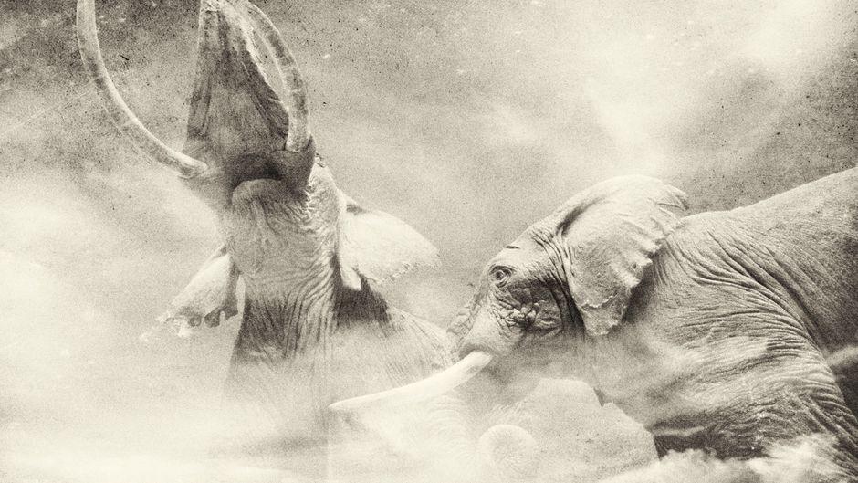 アフリカゾウが、マンモスのユカに取って代わる時