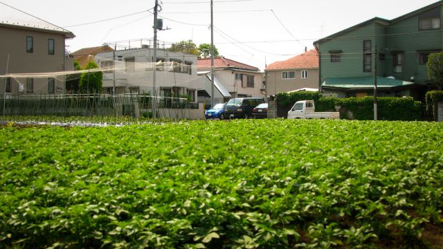 Japan's urban agriculture